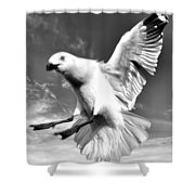Red Billed Seagull In Black And White Shower Curtain