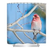 Red Bird Blue Sky Warm Sun Shower Curtain