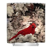 Red Bird In A Snow Covered Tree Shower Curtain