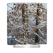Red Bird On Snow Covered Limb Shower Curtain