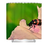 Red Blister Beetle Shower Curtain