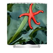 Red Bloodstar Shower Curtain