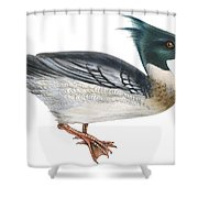 Red-breasted Merganser Shower Curtain by Anonymous