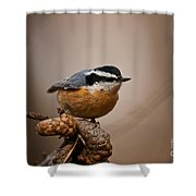 Red-breasted Nuthatch Pictures 36 Shower Curtain