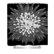 Red Bromeliad Painted Bw   Shower Curtain