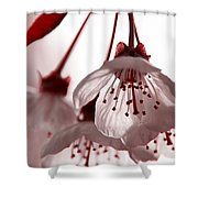 Red Bud Shower Curtain