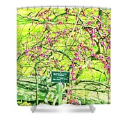 Red Bud Cascade Shower Curtain