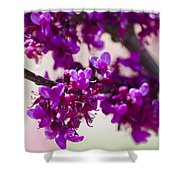 Red Bud Oklahoma Shower Curtain