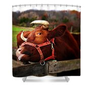 Red Bull Shower Curtain