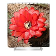 Red Cactus Flower Square Shower Curtain