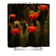 Red Cactus Flowers II  Shower Curtain
