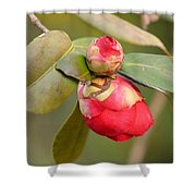 Red Camelia Buds Shower Curtain