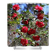 Red Camellias And Blue Sky Shower Curtain