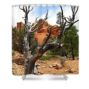 Red Canyon Tree And Rocks Shower Curtain