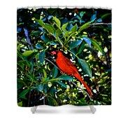 Red Cardinal 1 Shower Curtain