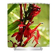 Red Cardinal Flower Shower Curtain
