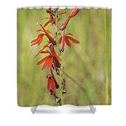 Red Cardinal Flower Shower Curtain