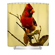 Red Cardinal No. 2 - Kauai - Hawaii Shower Curtain