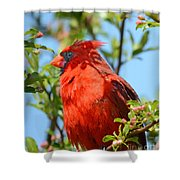 Red Cardinal Pink Blooms Shower Curtain