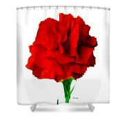 Red Carnation Shower Curtain