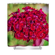 Red Carnations Shower Curtain by Omaste Witkowski