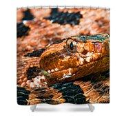 Red Carolina Pygmy Rattlesnake Shower Curtain