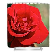 Red Carpet Rose Shower Curtain