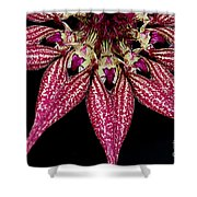 Red Chimney Shower Curtain