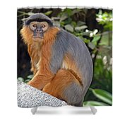 Red Colobus Monkey Shower Curtain