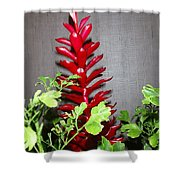 Red Cone Ginger - No 1 Shower Curtain