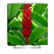 Red Cone Ginger Shower Curtain
