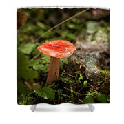 Red Coral Mushroom Shower Curtain