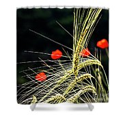 Red Corn Poppies Shower Curtain by Heiko Koehrer-Wagner