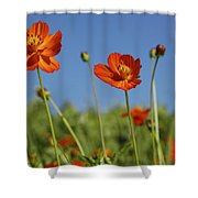 Red Cosmos Flower Shower Curtain