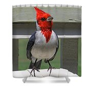 Red Crested Cardinal Shower Curtain