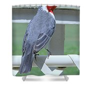 Red Crested Cardinal No 2 Shower Curtain