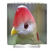 Red Crested Turaco Shower Curtain
