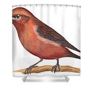 Red Crossbill Shower Curtain