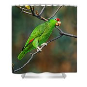 Red-crowned Amazon Shower Curtain