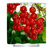 Red Currants Ribes Rubrum Shower Curtain