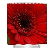 Red Daisy Shower Curtain