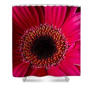 Red Daisy Close Up Shower Curtain