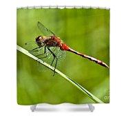 Red Darter Shower Curtain