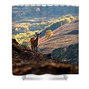 Red Deer Calf Shower Curtain