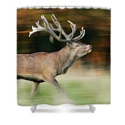 Red Deer Cervus Elaphus Stag Running Shower Curtain