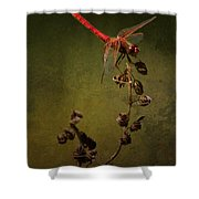Red Dragonfly On A Dead Plant Shower Curtain