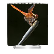 Red Dragonfly On An Antenna Shower Curtain