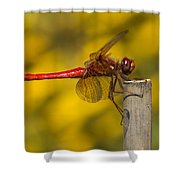 Red Dragonfly Waiting Shower Curtain