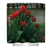 Red Dynasty Red Tulips Shower Curtain