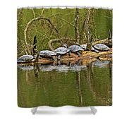 Red Eared Slider Turtles 2 Shower Curtain